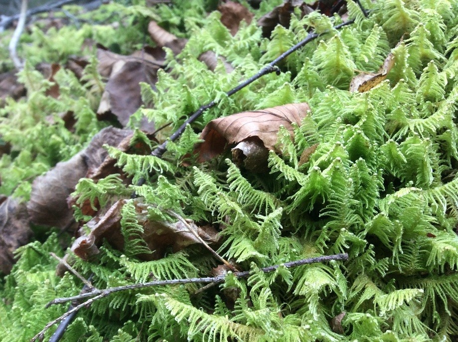 Trip photo #7/10 Ferns and mosses still green in the end of November.