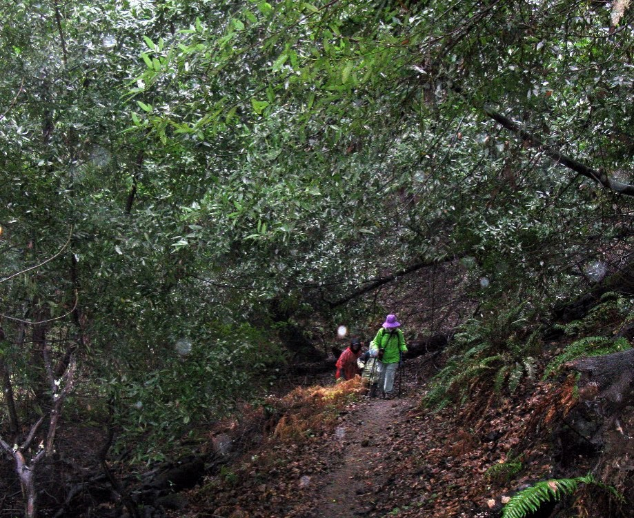 Trip photo #2/24 EBMUD trail