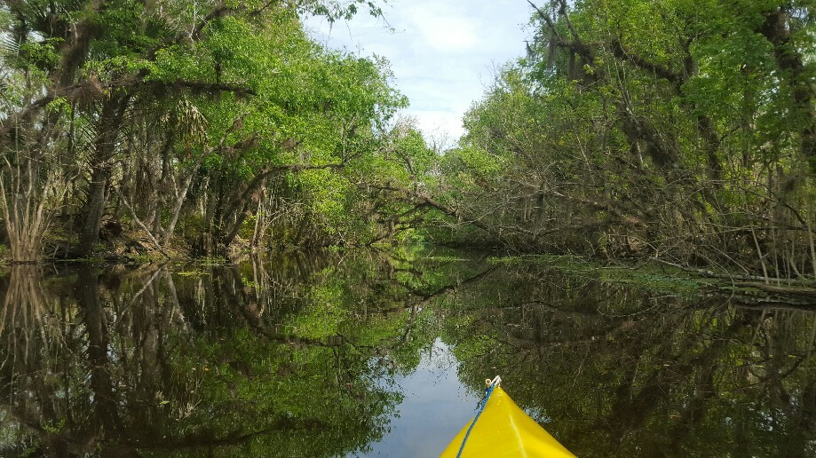 Trip photo #7/8 Inside Birdhouse canal - no bird houses, but we spooked a large gator up on the bank. Let me tell you they can run very very fast!!!