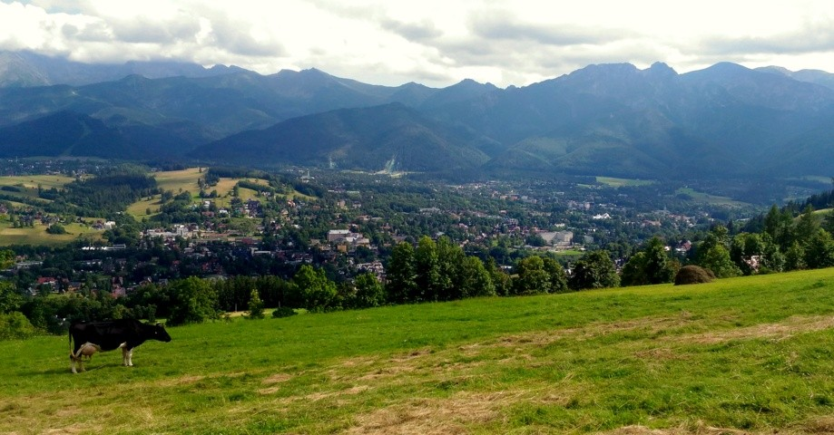 Trip photo #5/10 Panorama na krowę i Zakopane