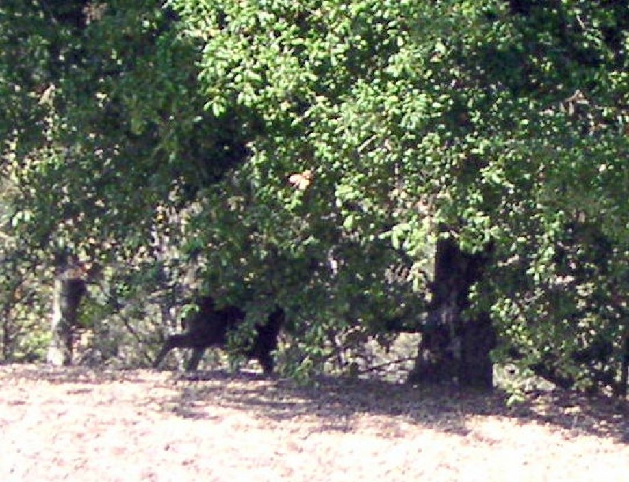 Trip photo #6/12 Deer hiding behind tree