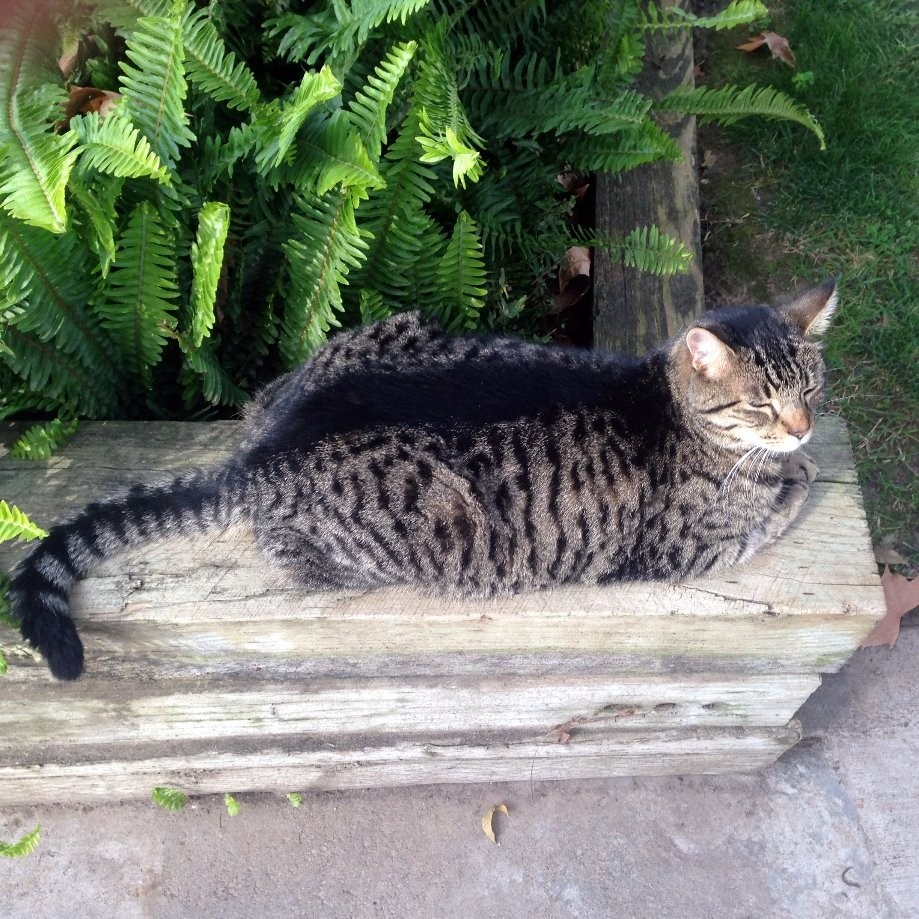 Trip photo #12/12 One of many felines  relaxing at the farmhouse