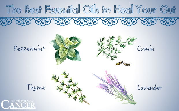 The Best 4 Essential Oils to Help Heal your Gut