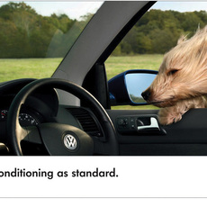 Volkswagen / Polo dog