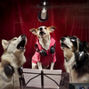 Ispca-charitysingle