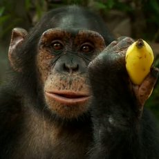 Fyffes / Chimp