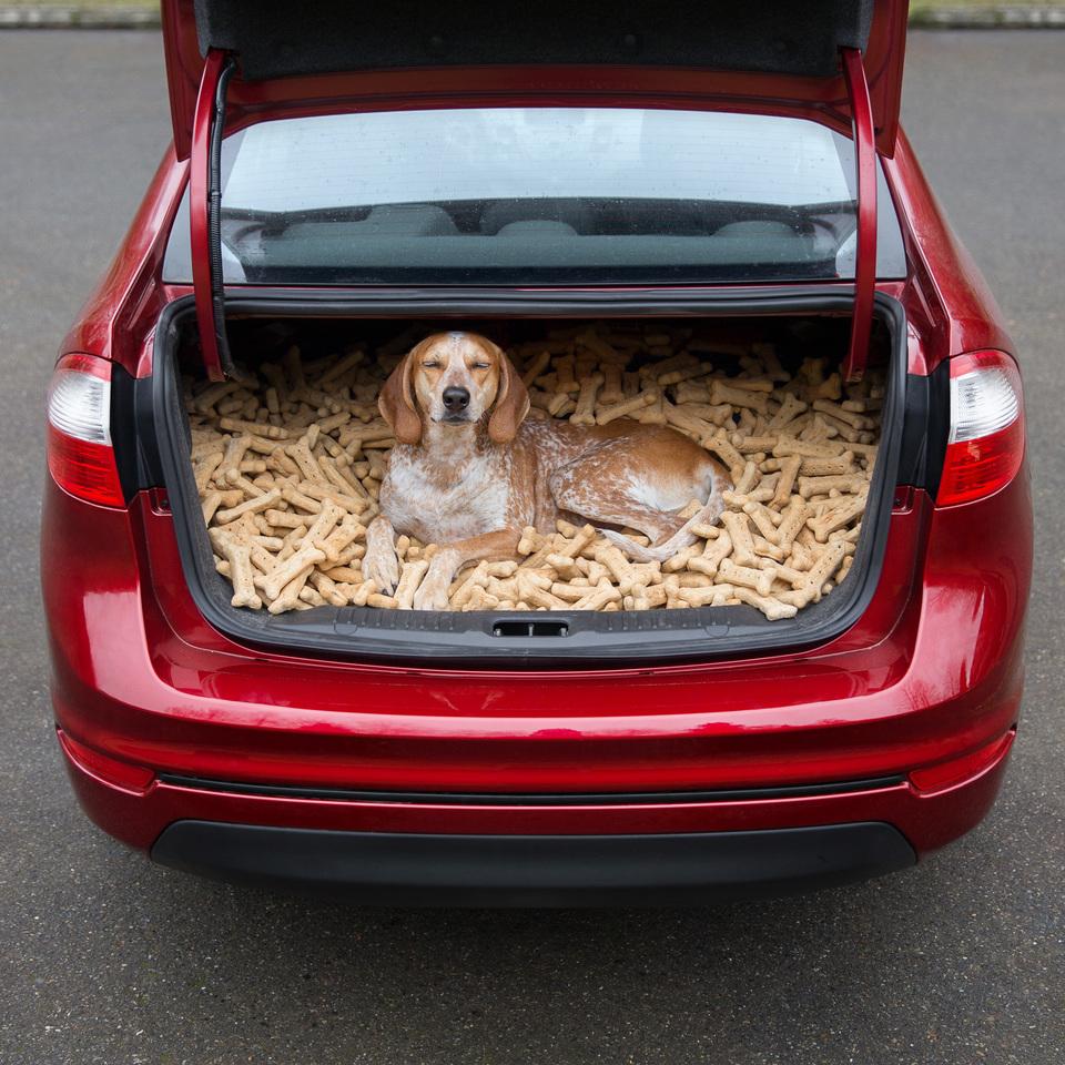 Maddie trunk