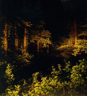 Nightforest_medium