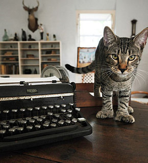 Hemingway-cat_medium