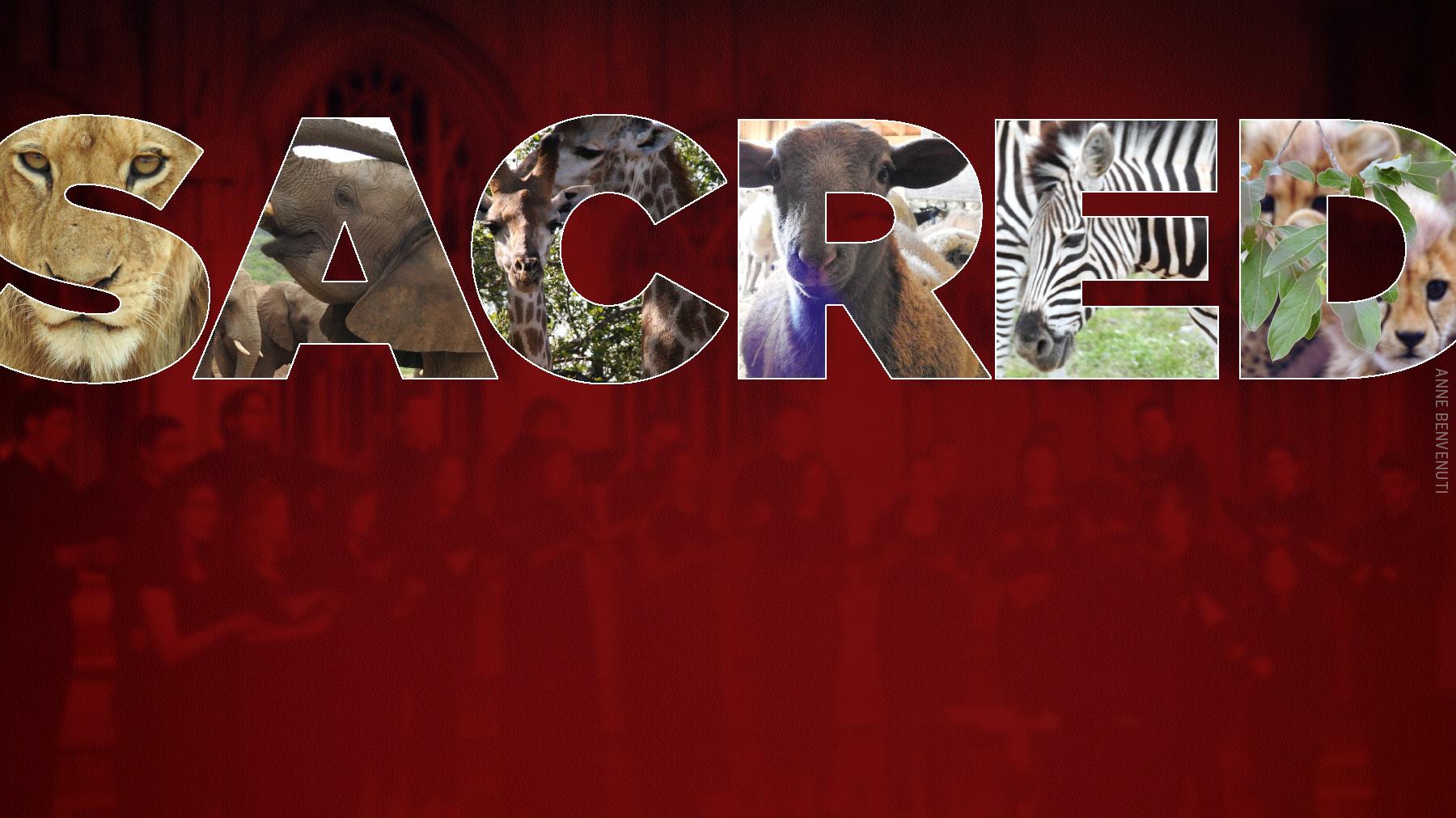 Banner-sacred-animals-rmc