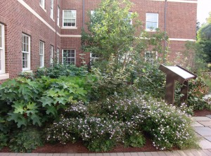 Sustainable landscape at UD's Visitor Center.