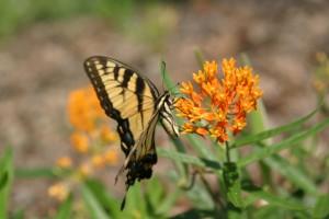 PLD Butterfly