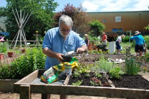 Master Gardeners volunteer time to spruce up the demonstration garden at the Carvel Center in Georgetown before the annual Open House July 13.