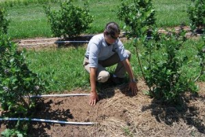What mulches work best? Emmalea Ernest will study various