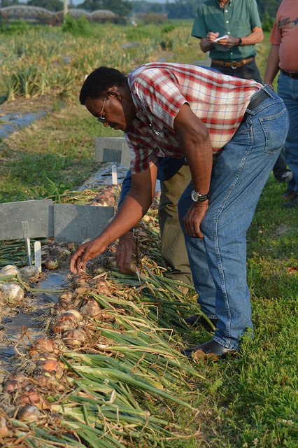 Norman Pierce, of Townsend, traveled south for a close up look at onions as an alternative drop