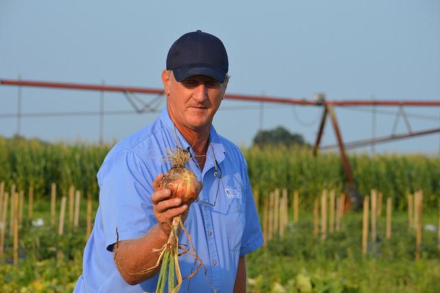 Delaware onions Gordon Johnson