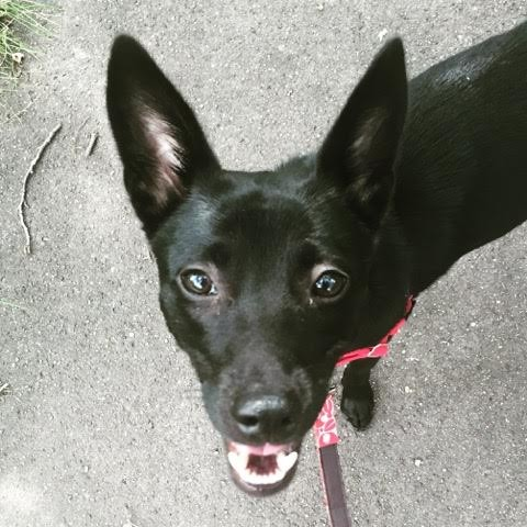 Loves walks!