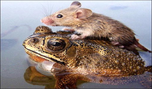 Frog &amp; Mouse