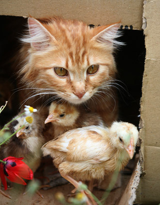 Nirma &amp; Chicks