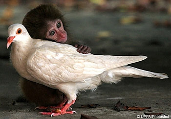 Monkey &amp; Pigeon