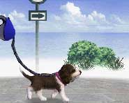 Play with your puppy, take it for walks, enter it in competitions and buy it more puppy friends!