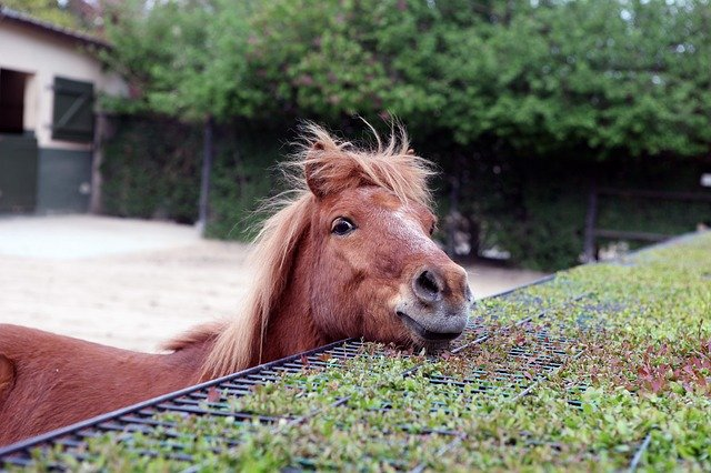 What Does Your Young Horse Need to Know?
