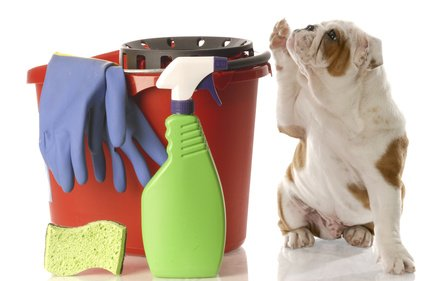 The Best Dog Urine Cleaning Products
