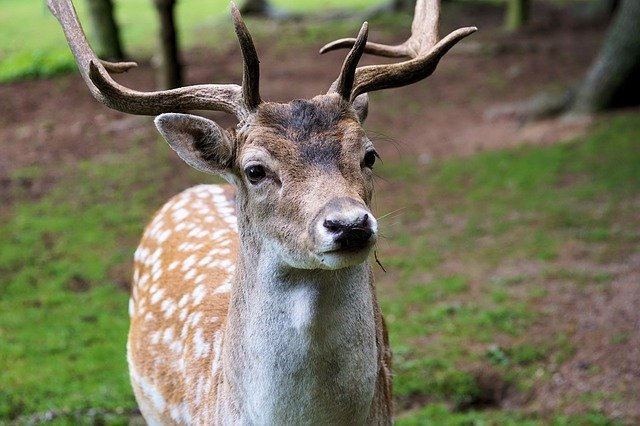Ohio's Traditional Deer-Gun Hunting Season Begins Nov. 27