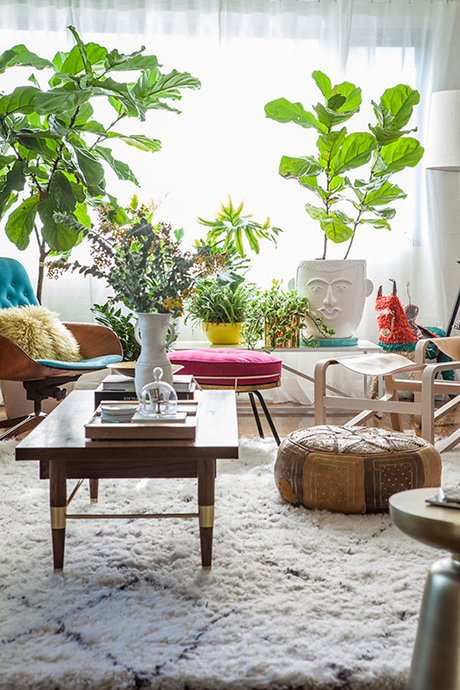 FIVE ways to care for your houseplants this winter