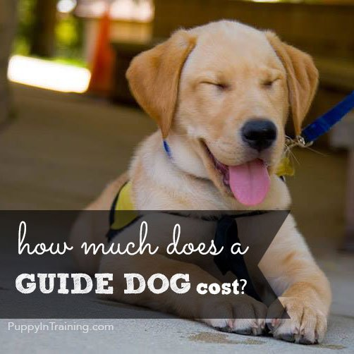 Do You Know How Much A Guide Dog Costs?