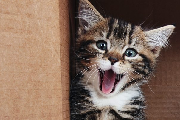 10 Fun Facts About Moggies