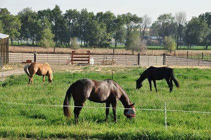 Keep Pastures Healthy With Rotational Grazing