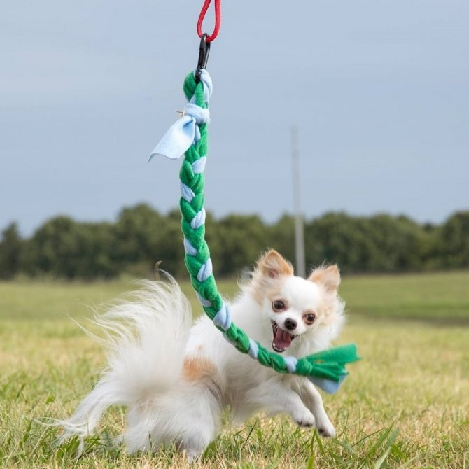 Tether-Tug-Dog-Toy