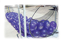 BOSS 1000 BALLOON DROP: 22½ft x 4½ft CAN HOLD 1000 9in OR 500 11in BALLOONS
