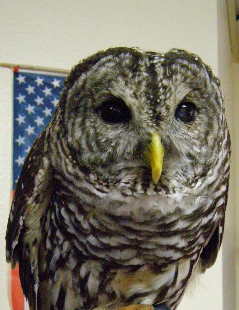 region_1E-Owl1