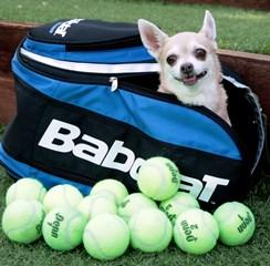 tennisch