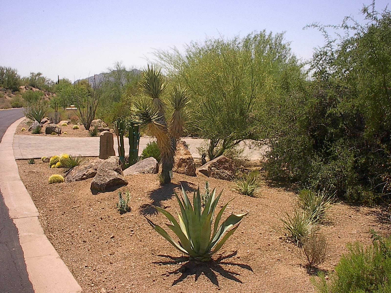 Gallery Landscape Design Palm Desert Landscaping Backyard