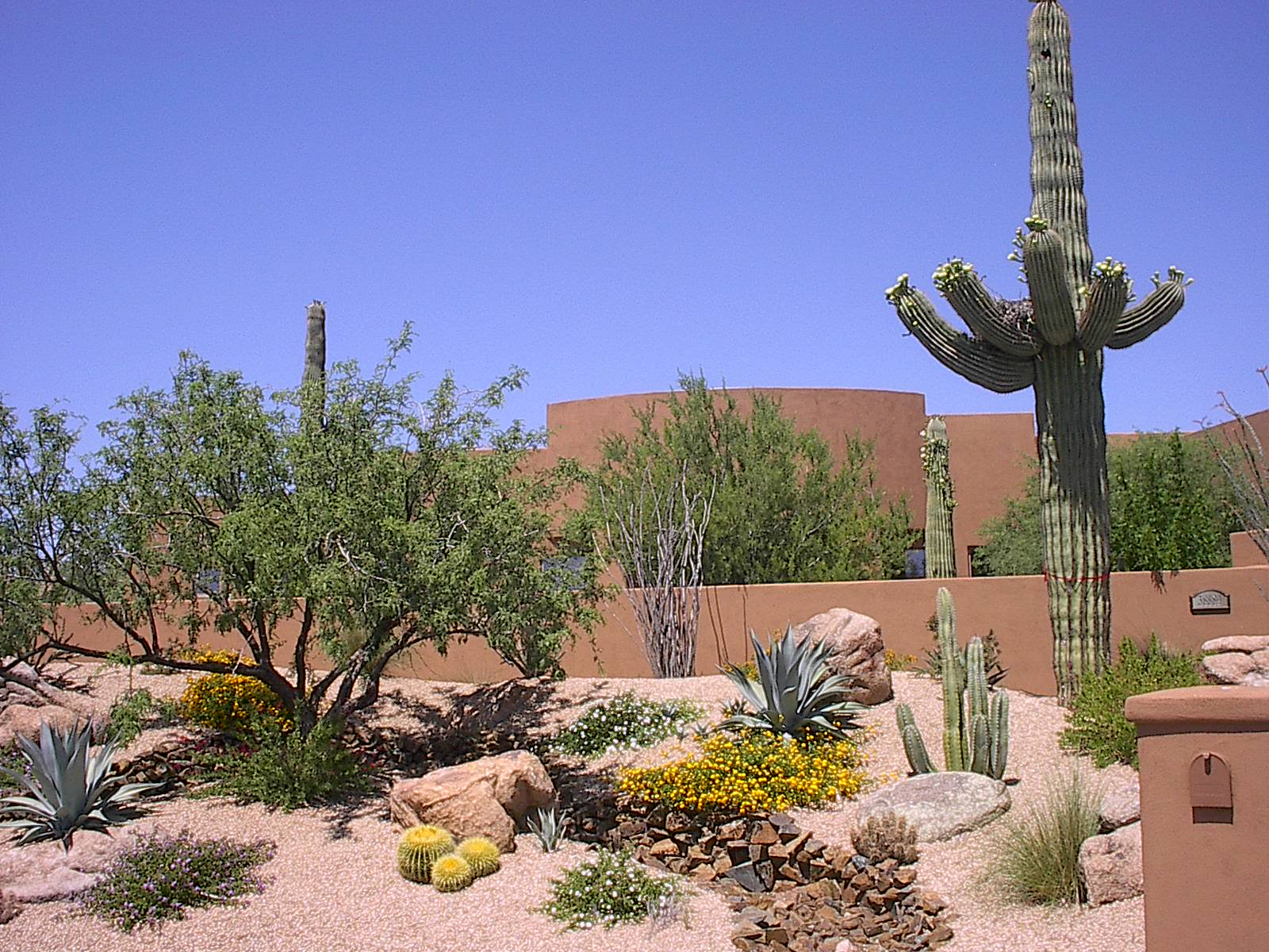Featured project gallery for Desert landscaping ideas