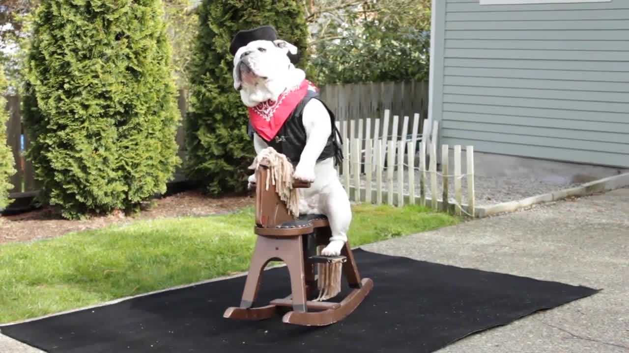 Bulldog On A Rocking Horse