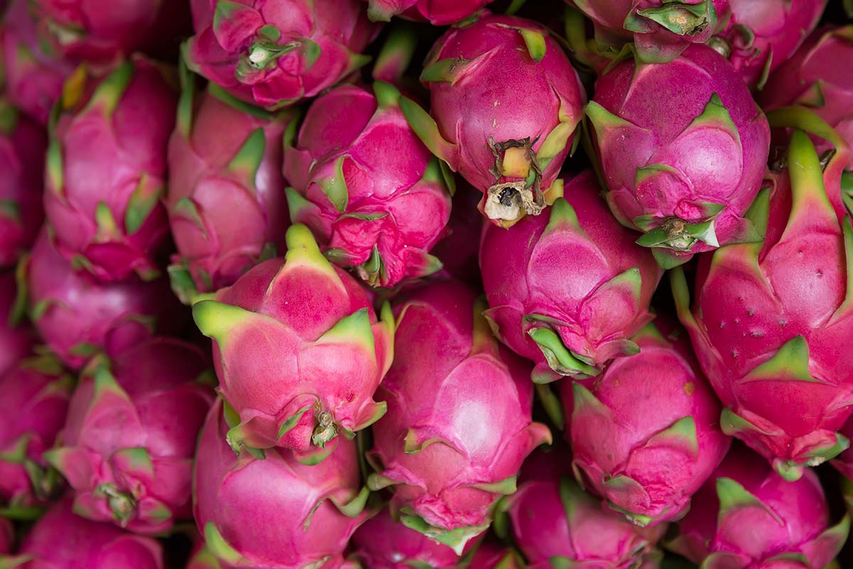 Dragon fruit saphan kao fruit market bangkok thailand