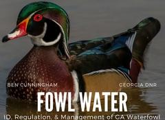 Fowl_water