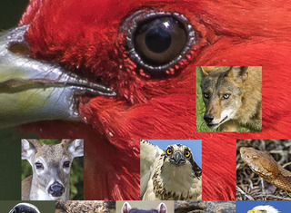 Wildlife_snippets_email_header