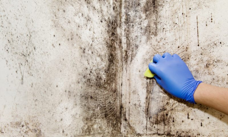 schimmel verwijderen koelkast rubbers