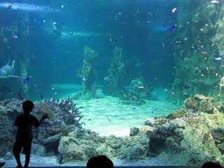 Aquarium.MOV