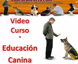 Curso vdeo Educacin canina (Parte 1)