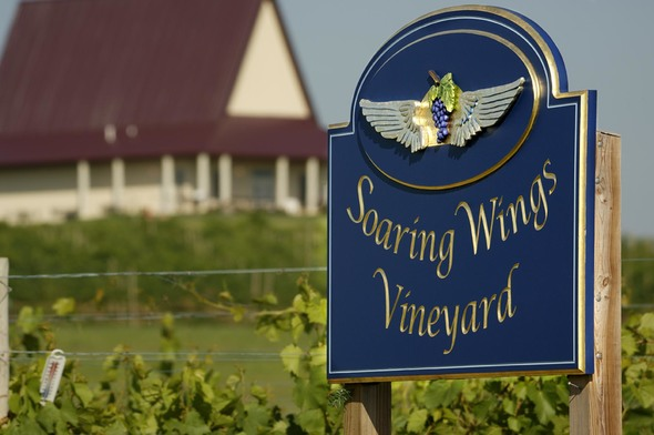 Soaring Wings Vineyard (Springfield, NE): Top Tips Before You Go ...