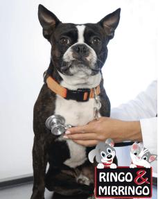 Bono de $30.000 para consulta + exámenes prequirúrgicos