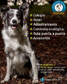20% de Descuento en la Mensualidad para tu Perro