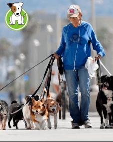 Paseo para tu perro GRATIS por una semana