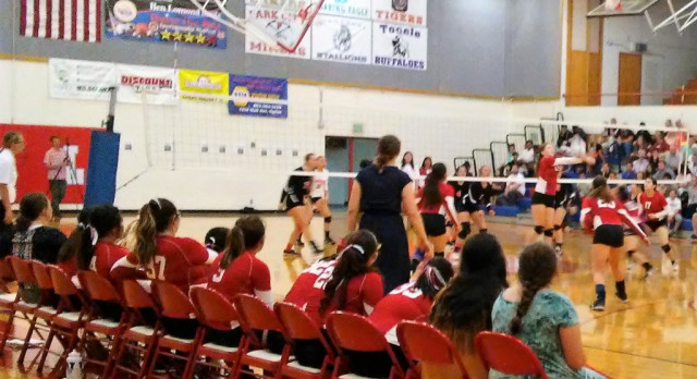 Volleyball Loses to Tigers